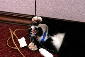 Кошка грызет провода