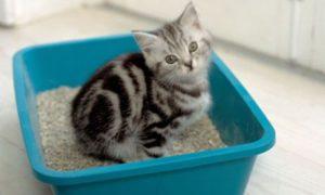 Кошка на лотке