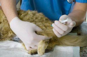 Укол кошке внутримышечно