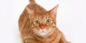 Кошка чихает и слезятся глаза