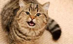 Что делать, если кошка стала гадить где попало, и почему так происходит