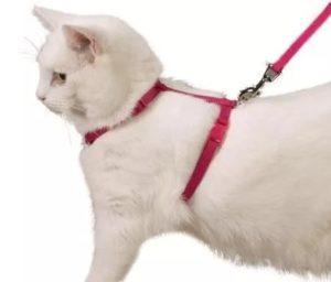 Как быстро надеть поводок на кошку