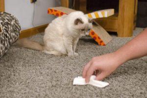 Как гарантированно удалить запах кошачьей мочи