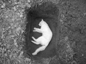 похоронить кошку зимой
