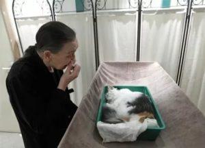 где можно похоронить кошку зимой