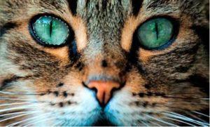 Как кошка реагирует на яркие предметы и видит их
