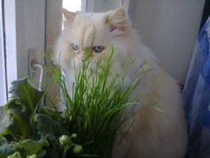 отучить кошку от сухого корма