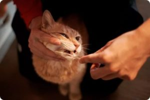 Чистим зубы котятам
