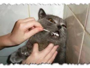 почистить зубы кошке