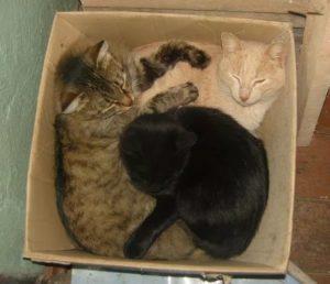 Как можно подружить двух кошек в одной квартире