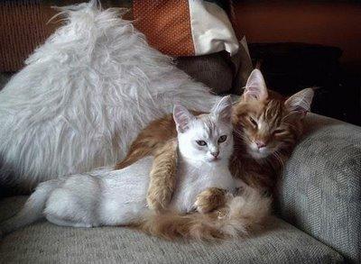 Когда кошка хочет кота как понять
