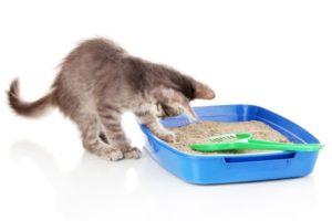 Как можно приучить кошку ходить в лоток