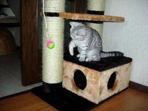 Как можно приучить кошку к домику