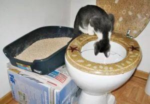 приучить кошку к лотку