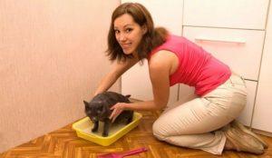 Как можно приучить взрослую кошку к лотку