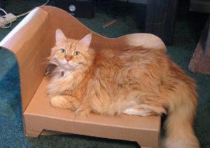 Как можно сделать картонный домик для кошки своими руками