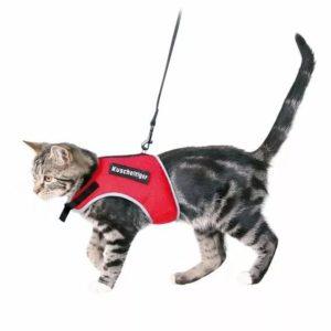 Как можно сделать ошейник для кошки