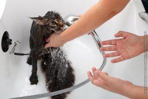 Как правильно купать кошку, если она боится воды