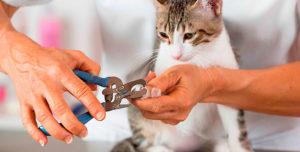 Как правильно подстричь когти кошке без нервов