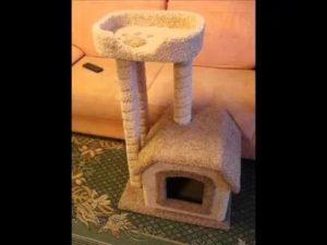 Для чего нужен отдельный дом для кошки