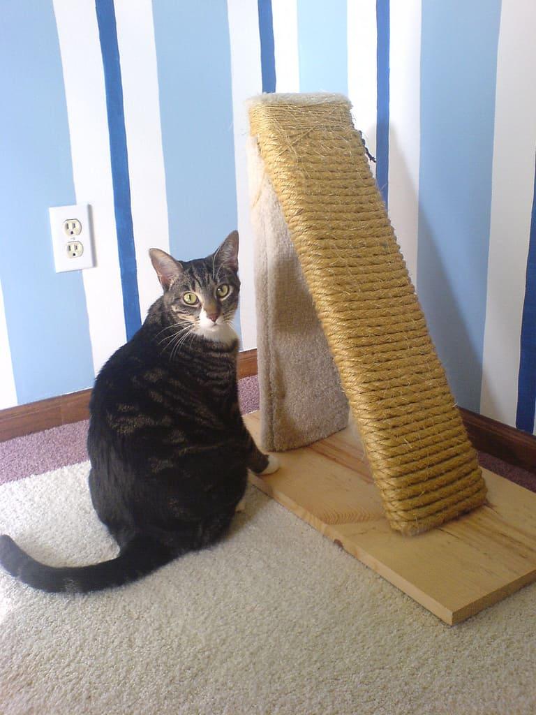 Как самому сделать когтеточку для кошки