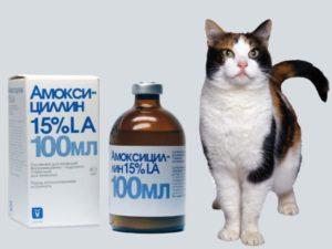 применять Амоксициллин для кошек