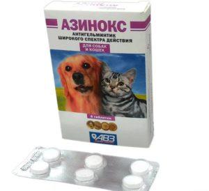 Как применять Азинокс для кошек