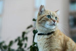 Как применять Максидин для кошек
