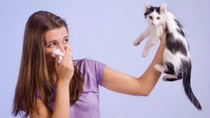 Народные методы уничтожения симптомов аллергии на кошек