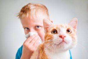 вылечить аллергию на кошек