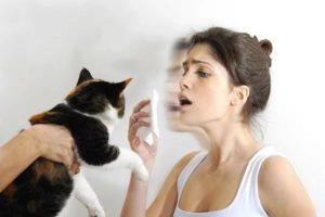 Как вылечить аллергию на кошек и можно ли это сделать