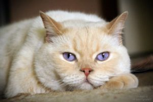 клички для кошек
