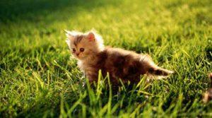 Какие есть красивые клички для кошек