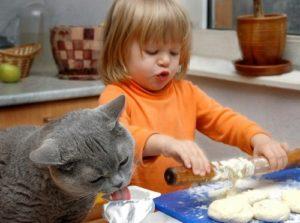 Какие есть лучшие породы кошек для детей
