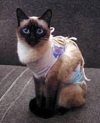Какие есть виды стерилизации кошек и какой выбрать