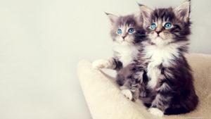 Какие цвета  кошки видят