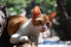 Какую мазь от лишая для кошек лучше выбрать