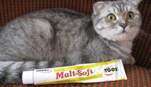 пасту для выведения шерсти у кошек из желудка выбрать