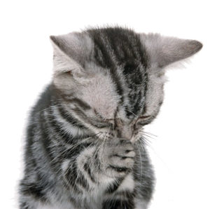 Какую пасту для выведения шерсти у кошек из желудка выбрать