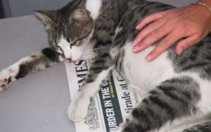 на какой неделе начинают шевелиться котята у беременной кошки