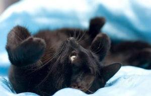 Лучшие безопасные обезболивающие для кошек