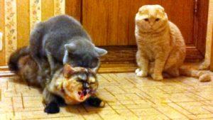 кастрированный кот спариваться с кошкой