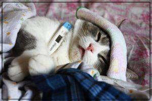 Могут ли люди заразить кошку