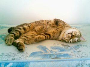 Может ли кошка заразиться от человека простудой