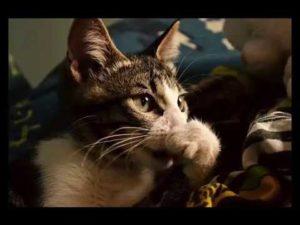 Может ли кошка простудиться
