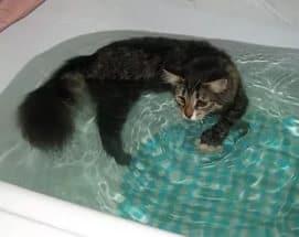 Принцип купания кошки