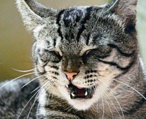 Почему кошка чихает и как ей помочь