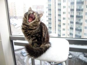 кошка орет без причины