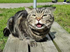 Почему кошка показывает язык и что это значит