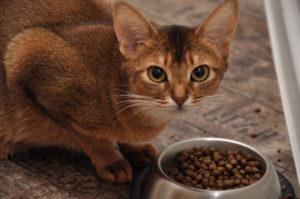 кошка закапывает миску с едой лапой